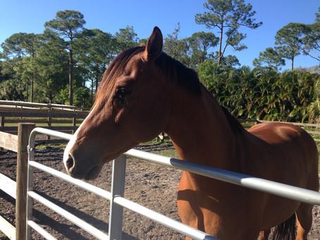 A Horse Sheds Light on Change
