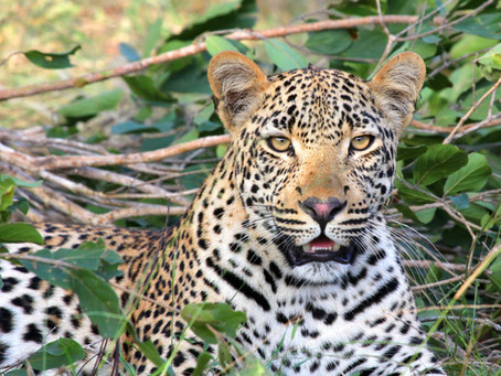 Math, Ethics and Wild Animals