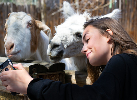 On Connecting With Animals: Book Trib Interview With Sandra Mendelson
