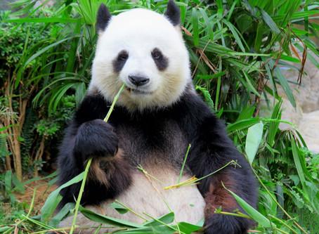 Still More Animal Insights on Growing Older