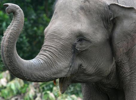 An Elephant: On Leading The New Earth