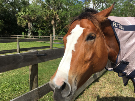 Equine Wisdom: Response To World Tragedies