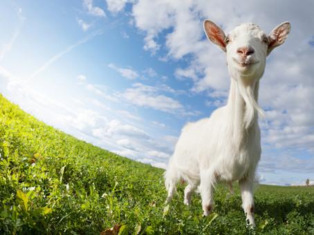 The Animals Speak on Growing Older, Growing Wiser