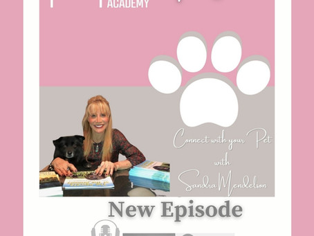 PODCAST WITH PET PIX ACADEMY:  CONNECTING WITH YOUR PETS TO TAKE PHOTOS THAT CAPTURE THEIR SOULS