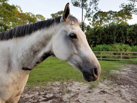 Inside View: How Horses Heal Us  Energetically