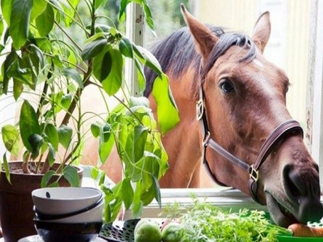 GOOD FOR ME, GOOD FOR MY HORSE: Diet Changes and Detox Can Make A Powerful Difference