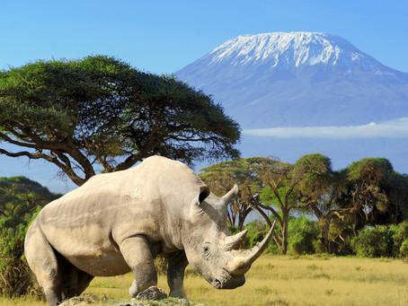"Rhino/Hippo Wisdom on ""Aging"""