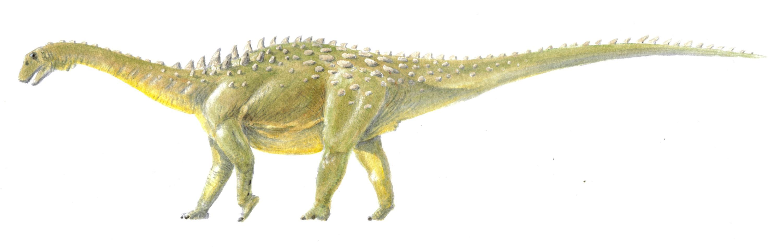 Ampelosaurus_edited