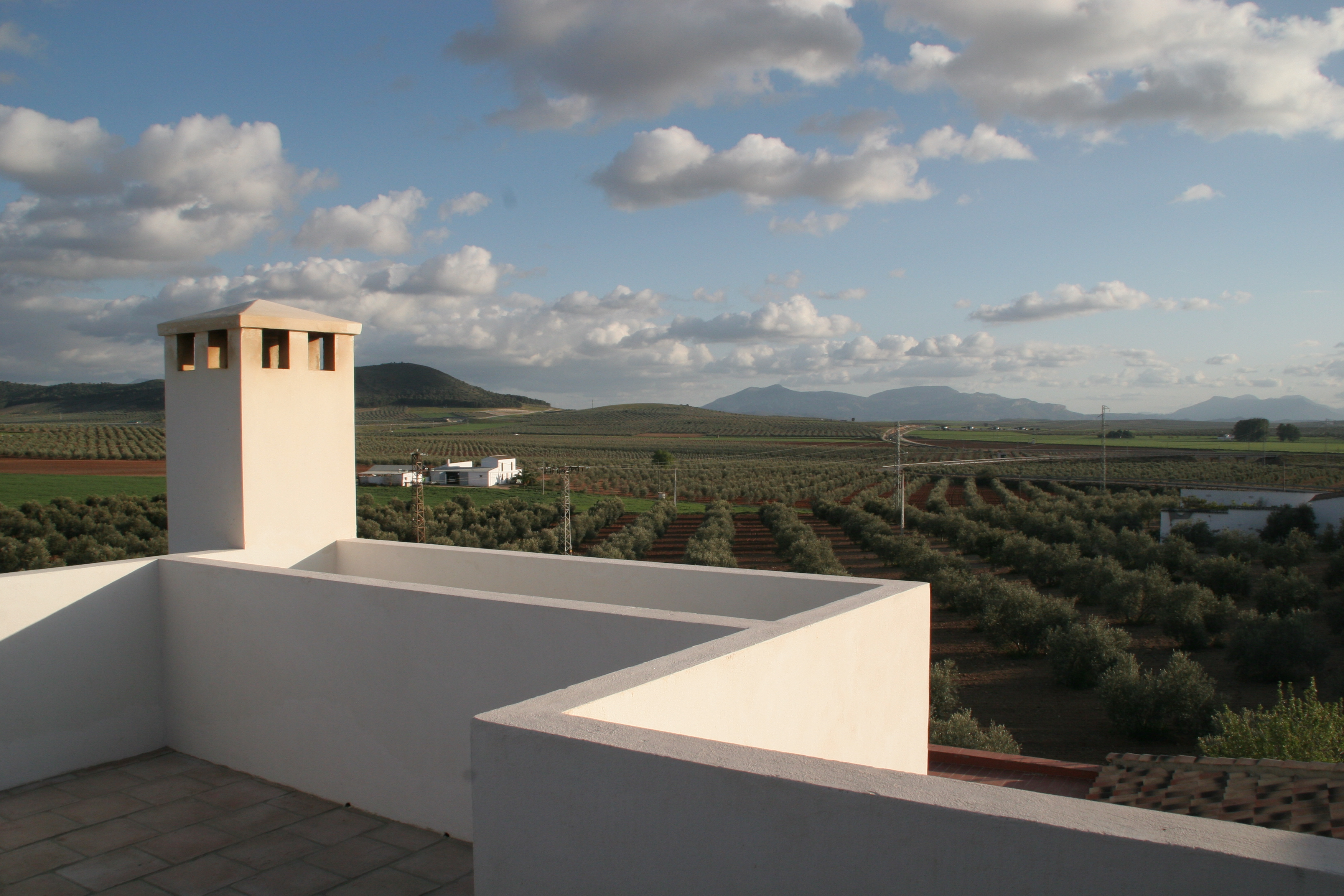 Roof Deck View towards the olives