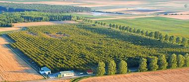 Walnut orchard in Osli Hungary