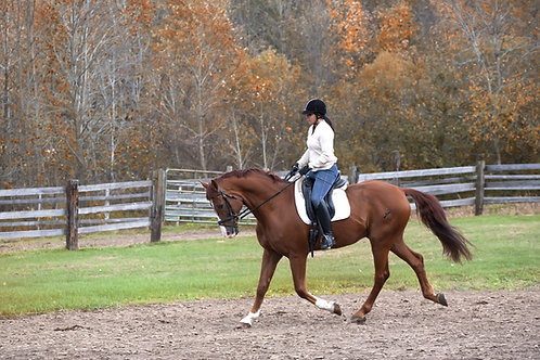Flatwork Schooling With Confidence