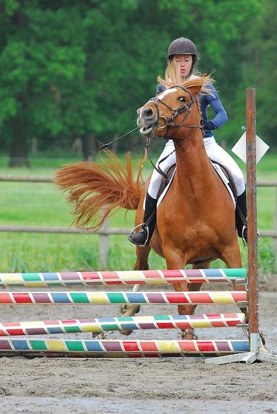 horse napping.jpg