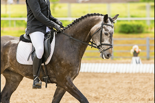 Dressage With Confidence