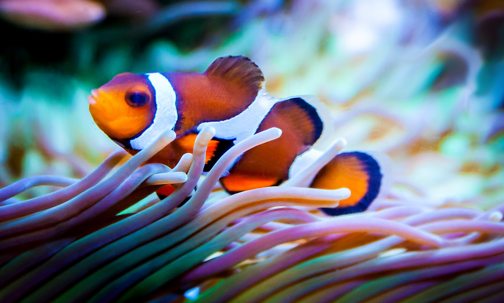 AWARE: Fish Identification
