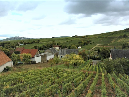 奥尔良的4大酒农们À la rencontre des 4 vignerons d'Orléans  !