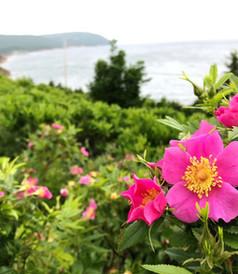 Cliff Waters Roses.jpg