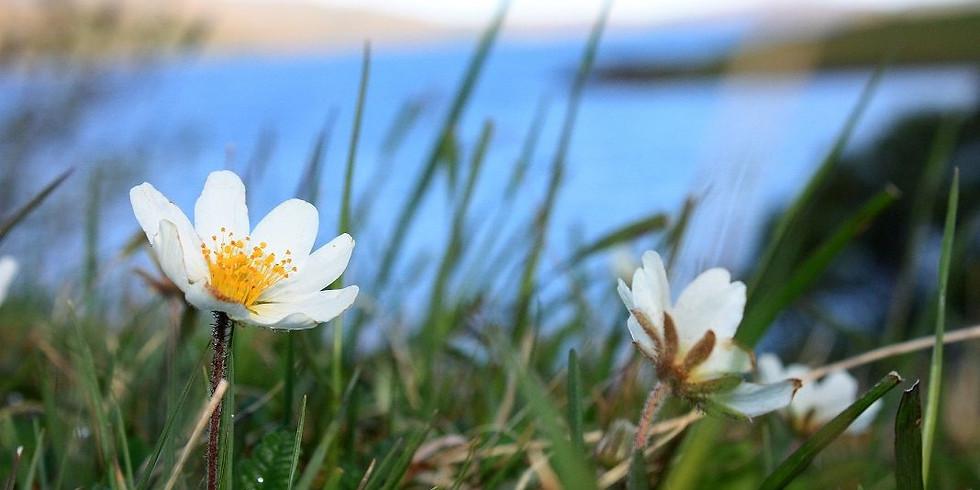 Assynt Ranger Walk - Limestone Wildflowers at Inchnadamph