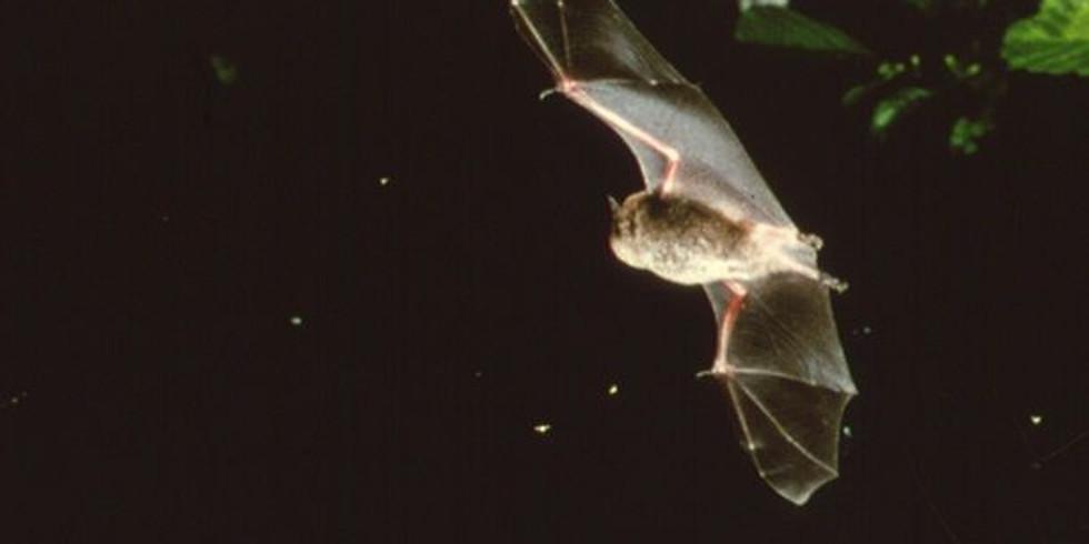 Assynt Ranger Walk - Bat Watching