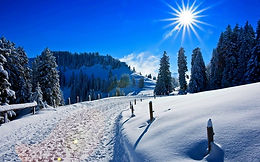 129297-sunny-day-winter-snow-covered-pine-trees-path-4k.jpg