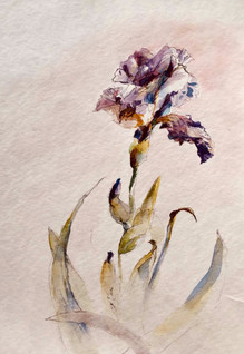 Iris | Jozefa peintures