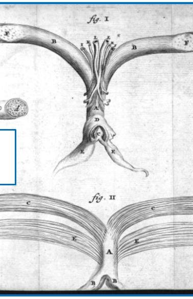 De Graaf (1672)
