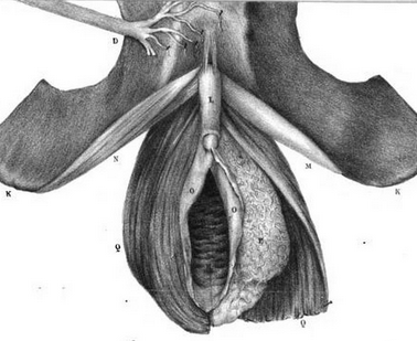 Flourens (1836)
