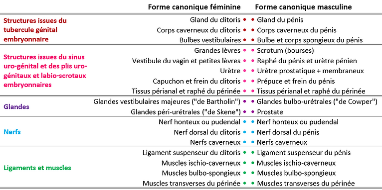 Page anat_tableau homologie.png