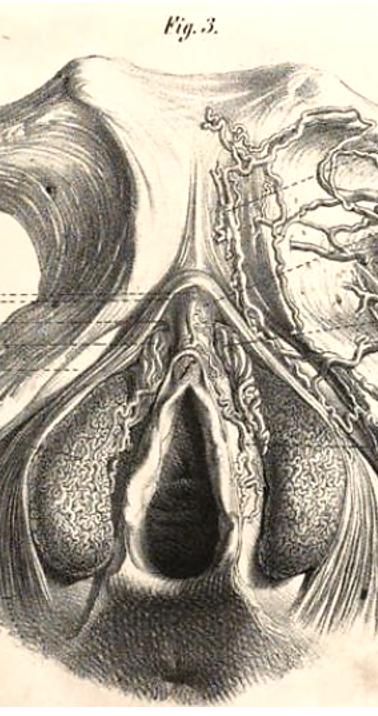 Kobelt (1844)