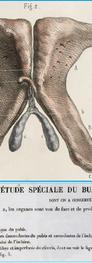 Bourgery & Jacob (1839)