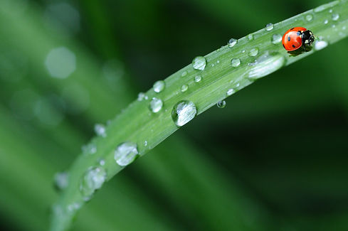 animal-leaf-morning-spring-40731.jpg