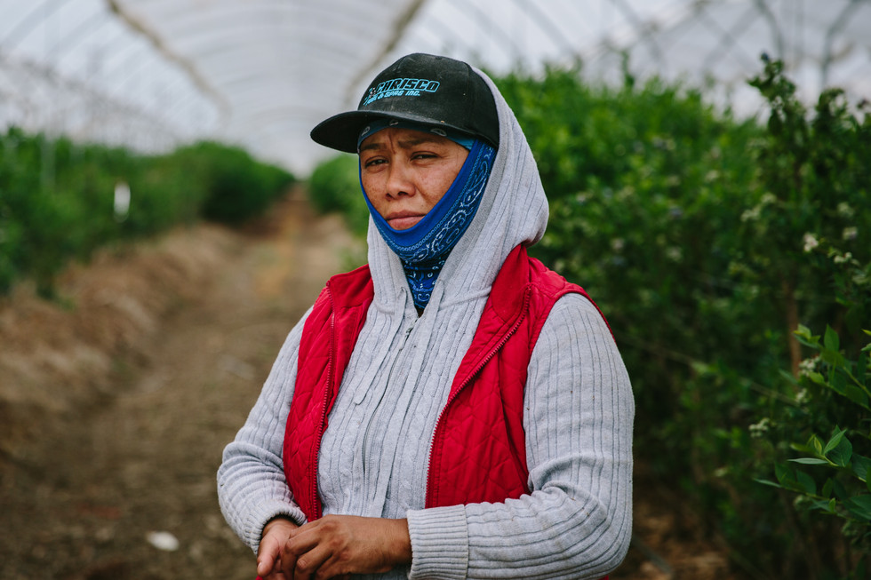 Farm Workers, Central Valley, CA