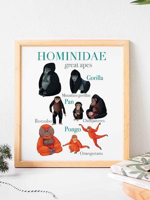 Glicee art print poster, animal poster, great apes, Hominidae, Nature guide