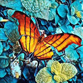blue-mint-fly-cristiano-chaussard-art.jp