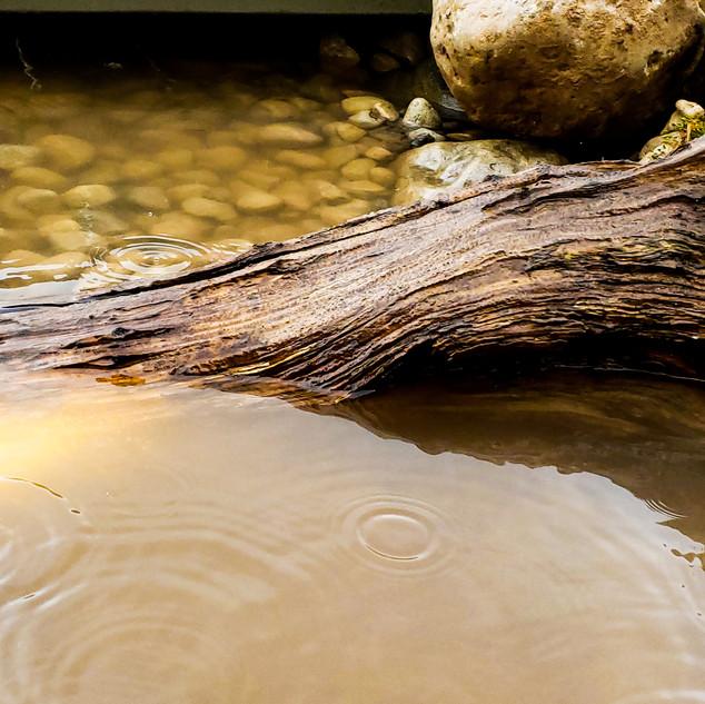 Driftwood lighting.jpg