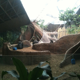 Overall gorilla habitat
