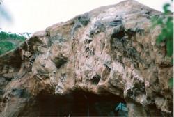 Zoo 20050004
