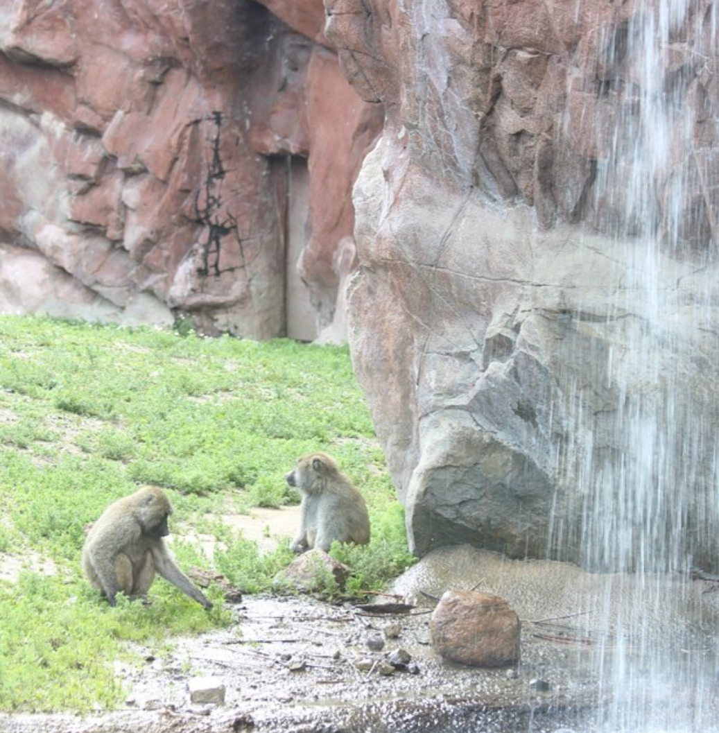 Family time +Toronto Zoo #artificialroc