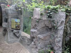 Artificial Rock walls