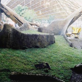 Gorilla habitat retaining wall