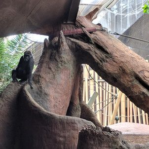 Gorilla Jungle Gym