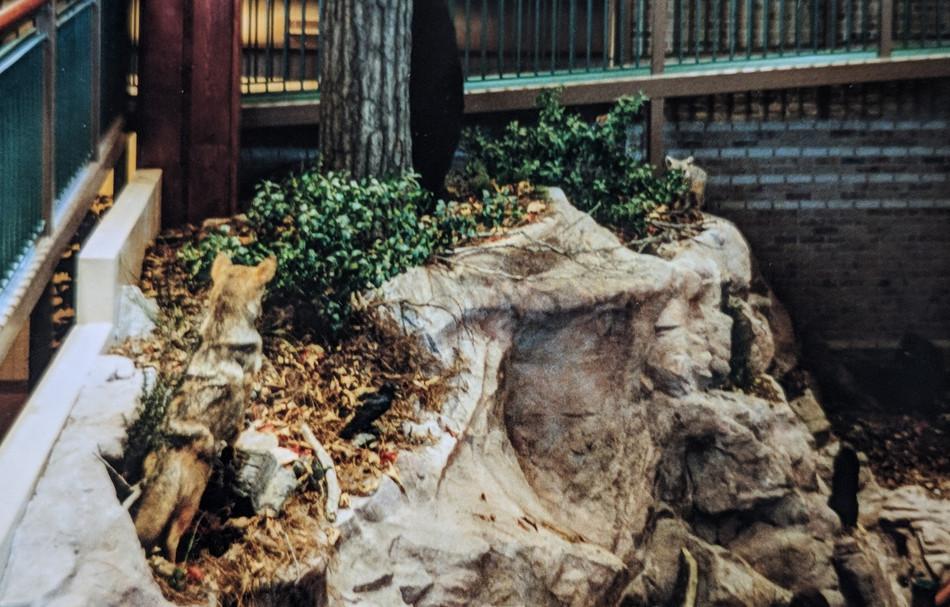A black bear hiding behind the artificial tree