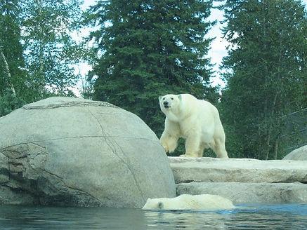 Artificial rock and polar bear
