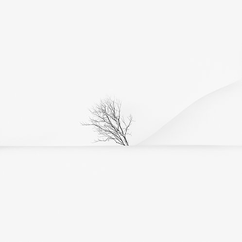 snow lines & a tree