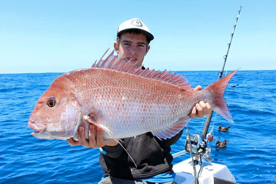 Tackle International Cowan Wise Snapper
