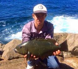 Tackle International Blue Grouper