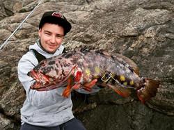 chris harlequin fish