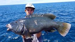Tackle International Big Blue Grouper