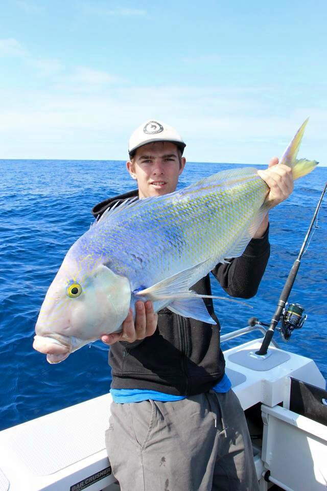 Tackle international Silver Snapper