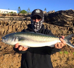 Tackle International Australian Salmon