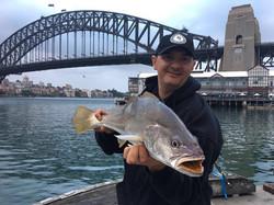 Tackle International Jewfish